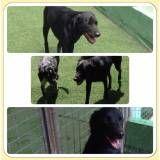 Adestradores para cão no Butantã