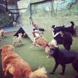 Adestradores para cão no Pacaembu