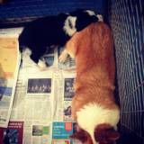 Adestramento cãezinhos em Pinheiros