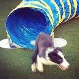 Adestramento cãozinho no Jardim Bonfiglioli