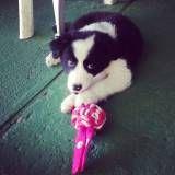Adestramento cãozinho no Pacaembu