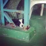 Adestramento de cachorrinho em Embu das Artes