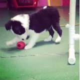 Adestramento de cachorrinho no Ibirapuera