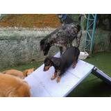 Adestramento de cachorrinho no Jardim Paulistano