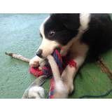 Adestramento de cachorrinhos no Aeroporto