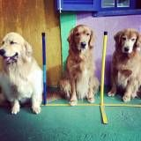 Adestramento de cachorro no Sacomã