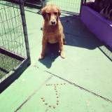 Adestramento de cachorros no Jaguaré