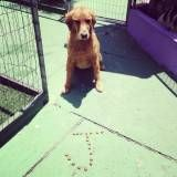 Adestramento de cachorros no Jardim Bonfiglioli