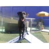 Adestramento de cães em Pinheiros