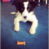 Adestramento de cães em Santo Amaro