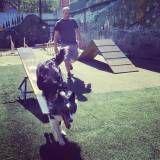 Adestramento de cães em São Paulo