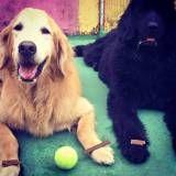 Adestramento de cães em SP