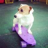 Adestramento de cães na zona Sul