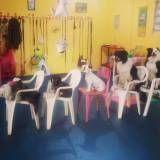Adestramento de cães no Butantã