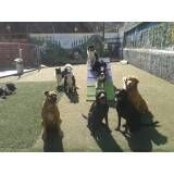 Adestramento de cães no Itaim Bibi