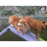 Adestramento de cães no Morumbi