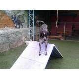 Adestramento de cãezinhos em Jandira