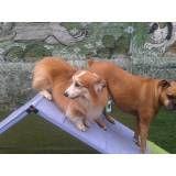 Adestramento de cãezinhos no Jabaquara
