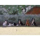 Adestramento de cãozinho em Cajamar