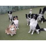 Adestramento de cãozinho na Vila Andrade