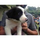 Adestramento de cãozinho no Jardim Paulistano