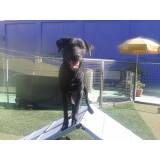Adestramento de cãozinho no Rio Pequeno