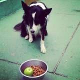 Adestramento para cão na Cidade Dutra