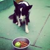 Adestramento para cão na Pedreira