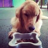 Adestrar cães no Jardim América