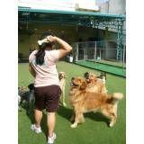 Adestrar cãozinho na Água Branca