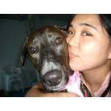 Adestrar cãozinho no Brooklin