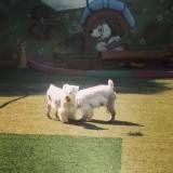 Brincadeira para cão em hotel no Jardim Paulista