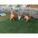 Brincadeiras para cão em hotel no Jardim Paulista