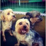 Cachorrinhos na Cidade Ademar