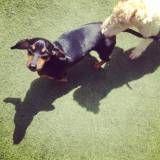 Cachorros hotéizinhos em Moema