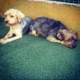 Cão em Pinheiros
