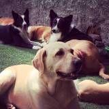 Creche de cães na Cidade Dutra