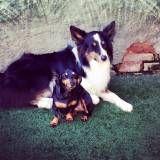 Creche de cães
