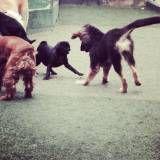 Creche de cão no Jardim Europa