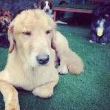 Creche para cachorro no Butantã