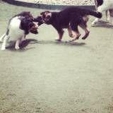 Creche para cachorro no Morumbi