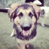 Creche para cachorros na Vila Leopoldina