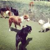 Creche para cães no Brooklin