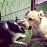 Creche para cão no Jardim América