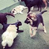 Creches de cães em Jandira