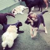 Creches de cães no Butantã