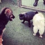 Creches de cão  em Raposo Tavares