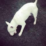 Creches para cães no Campo Belo