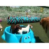 Cuidado para cachorro na Água Branca