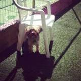 Cuidados com cães em hotéis  em São Lourenço da Serra